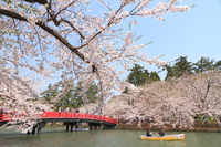 Sakura and boat Hanami landscape Stock photo [2993343] Shun'yo