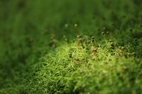 Green carpet Stock photo [3069540] Green