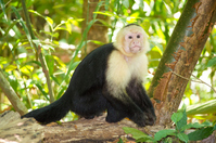 Jungle Monkey Stock photo [3075826] APE
