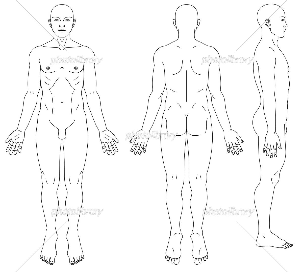 Human body diagram of male イラスト素材