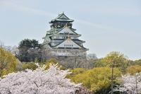 Spring of Osaka Castle Stock photo [3162786] Cherry