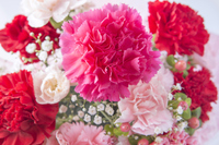 Carnation bouquet Stock photo [3165181] Bouquet
