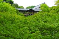 Fresh green of Tofukuji Stock photo [3166618] Tofukuji