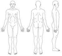 Human body diagram of male [3166975] Human