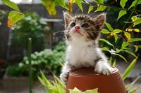 Kitten Looking Up Stock photo [3167273] Cute