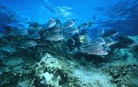 Fish Stock photo [97807] World