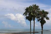 Daisuna coast of palm Stock photo [3269536] Palm