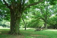 Zelkova of large tree Stock photo [3270708] Old