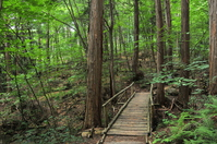 Akazawa Natural Recreation Forest Forest Therapy Stock photo [3273114] Akazawa