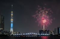 Fireworks and Sky Tree Stock photo [3273566] Fireworks