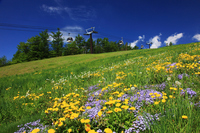 Tochigi Prefecture of spring Nasu Stock photo [3275388] Kanto