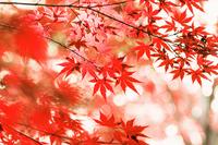 Autumn leaves Stock photo [3279153] Autumn