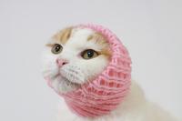 Cat suffering a net Stock photo [3279709] CAT