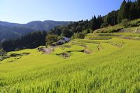 Thousand fields of terraced rice fields of Yusuhara Stock photo [3365289] Kochi
