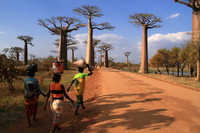 Landscape there is a baobab Stock photo [3368027] Baobab