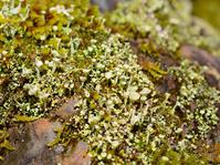 Fellow Princess funnel moss Stock photo [3457473] Hime
