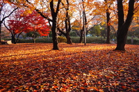 Sunset of late autumn of Asukayama park Stock photo [3466518] Park