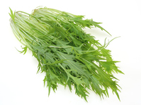 水菜 Stock photo [3556381] 水菜