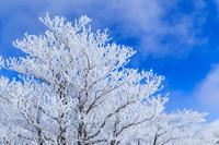 樹氷 Stock photo [3559021] 樹氷