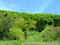 Fresh green of deciduous forest Stock photo [3561332] Mountain