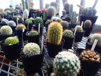 Cactus us Stock photo [3562753] Cactus