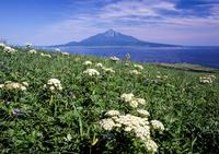 Of midsummer Rebun Stock photo [3668670] Landscape
