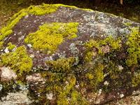 Mossy stone Stock photo [3669454] Moss
