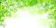 Leaf fresh green background [3669773] Leaf
