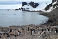 Deception Island penguins of Antarctica Stock photo [3780380] Antarctic