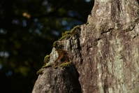 Moss that grows on the rocks Stock photo [3786262] Rock