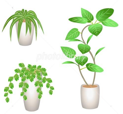 観葉植物 イラスト素材 3887708 フォトライブラリー Photolibrary