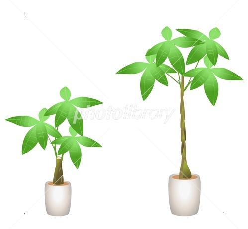 観葉植物 イラスト素材 3887737 フォトライブラリー Photolibrary
