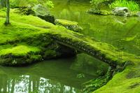 Moss Stock photo [3887550] Moss