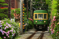 Go the hydrangea alley Stock photo [3888818] Railway