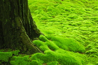 Or moss Stock photo [3889137] Moss