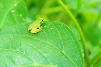 Tree frog Stock photo [3891715] Tree