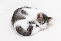 Kitten sleep mackerel tabby Stock photo [3976852] Cat