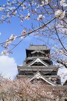 Sakura of Kumamoto Castle Stock photo [3980433] Kumamoto