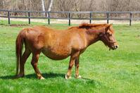 Kiso horses (Kiso horse-ri) Stock photo [3982016] Kiso