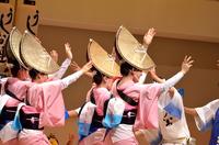 Tokushima Awa dance 2015 Stock photo [3982515] Tokushima