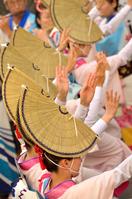 Tokushima Awa dance 2015 Stock photo [3982519] Tokushima