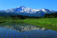 Akita Prefecture Chokai and paddy Stock photo [3982612] Chokai