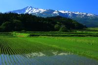 Akita Prefecture Chokai and paddy Stock photo [3982638] Chokai