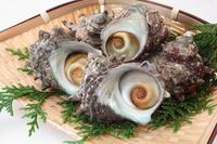 Turban shell Stock photo [4063602] Turban