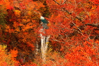 Nasu Komadome waterfall of autumn leaves Stock photo [4065558] Autumn