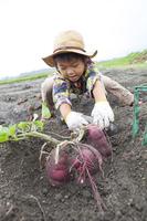 Children to potato digging Stock photo [4067808] Autumn