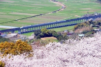 Kyushu Shinkansen and the flood of cherry blossoms Stock photo [4188022] Kagoshima