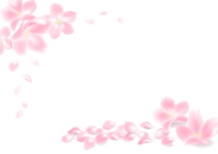 Sakura petals (white background ver.) [4236553] Cherry