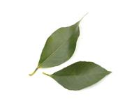 Lemon leaf Stock photo [4285206] lemon