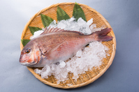 Red sea bream Stock photo [4286563] Want